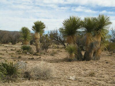 10 Acres - Hudspeth County Texas West Texas