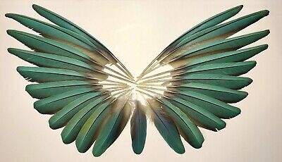 Blue Macaw Wing Feathers