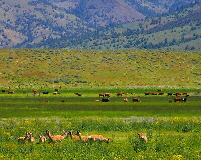 Great NATURE WILDERNESS 1-3 Acres RANCH MODOC COUNTY
