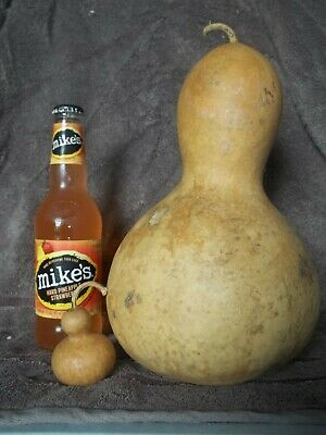 GIANT DRIED GOURD - BIRDHOUSE - CRAFTS - 10 x 20 snowman looking gourd 43