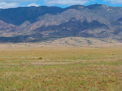 RARE 5 ACRE NEW MEXICO RANCH DIRECT ROAD ACCESS ADJOINS POWER NO RESERVE