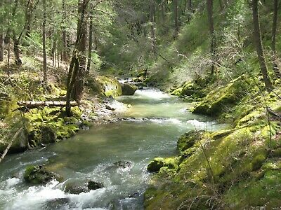 RARE 76-87 Acre Gold Mining Claim - Steephollow Creek - Nevada County CA - NR