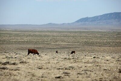 CHEAP LAND IN WYOMING - 40 ACRES - FINANCING AVAILABLE FOR ALL