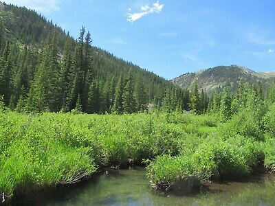 Colorado Gold Mine Prime Mining on North Quartz Creek Placer Claim Panning