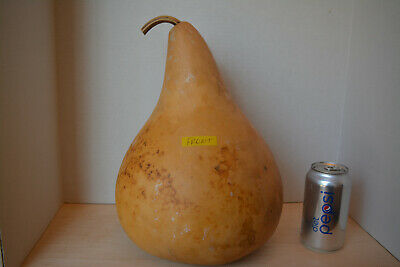 Thick-Skinned Tall Kettle Gourd