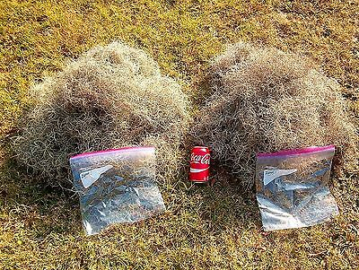 Live Spanish Moss 1 lb- Total Mail Weight Very Clean Patio Garden Home Decor