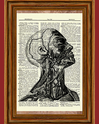 Human Anatomy Dictionary Art Print Poster Picture Skull Skeleton Brain Science