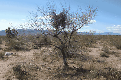 2-35 ACRES YUCCA ARIZONA KINGMAN AREA CASH SALE LIVE IN RV LEGALLY