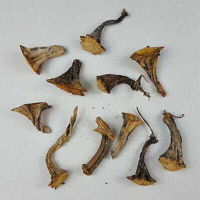 10 Naturally Dried 2-5-4 Real Pumpkin Stems Excellent Quality Velvet Stem