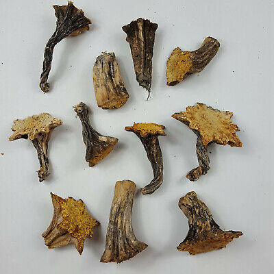 10 Naturally Dried 2-3-5 Real Pumpkin Stems Excellent Quality Velvet