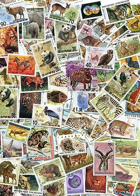 BEAUTIFUL COLLECTION OF WILD ANIMAL STAMPS - ALL LARGE
