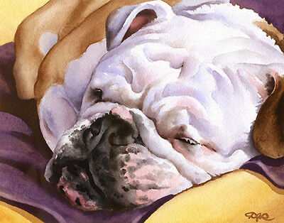 BULLDOG SLEEPING Watercolor Dog ART Print Signed by Artist DJR wCOA
