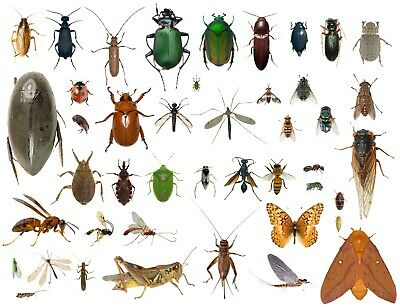 35- Dead Bugs Entomology Class Insect Bug Collection IDENTIFIED USA Native NEW