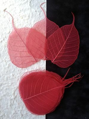 25 Red leaves Po Bo Banyan Skeleton leaf see through veins Valentine cards Small