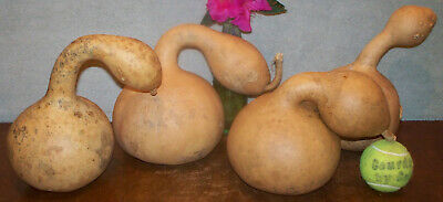 Four fun craft GOURDS with round bases  skinny necks  bigger offset handles