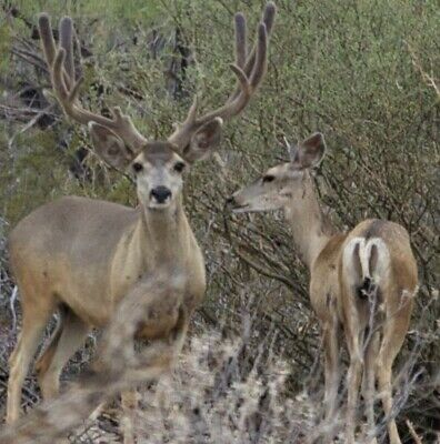 40 Beautiful Acres in the Arizona High Country  Just North of St- Johns