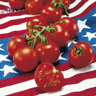 Fourth of July Tomato 4 Plants - Ripens in 44 days -Earliest Tomato in the World
