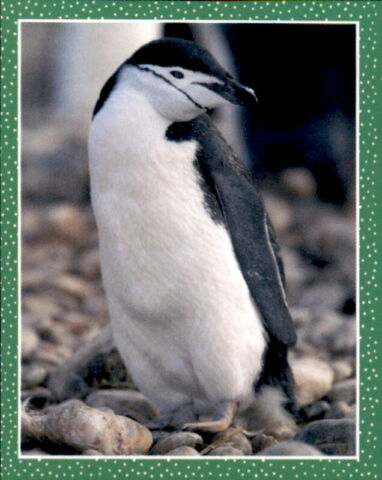 STICKER 142 TOPPS NATIONAL GEOGRAPHIC WILDE TIERE
