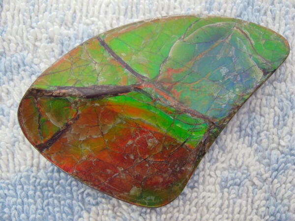 131.30 CT. NATURAL AMMOLITE SPECIMEN