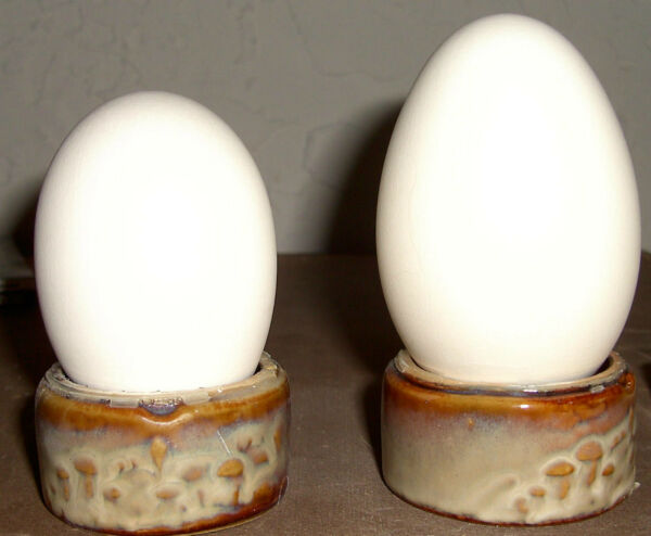 Blown Goose Eggs 8.5-10 inches Very clean. Shipping discount on multiples.