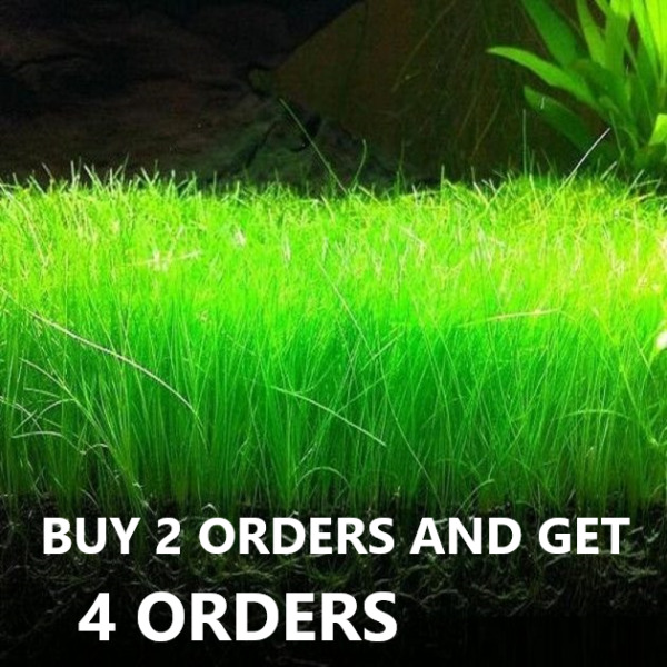 Dwarf Hairgrass Eleocharis Parvula Live Aquarium Plants Buy 2 Get 2 Free $6.99