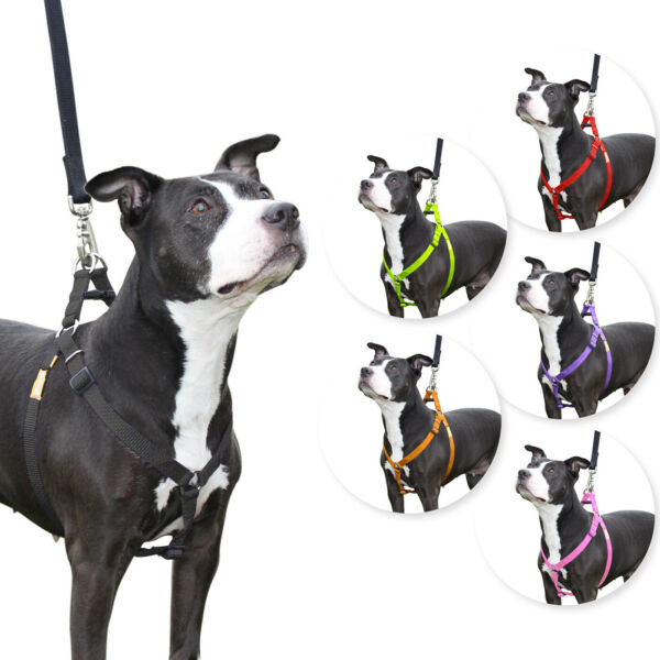 Step in Dog Harness Nylon Light Padding Adjustable for Easy Fit by CuteNfuzzy $9.95