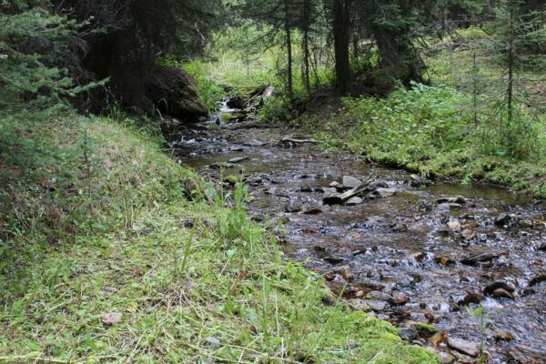 French Creek Montana Gold Mine Placer Mining Claim Panning Sluice Highbank Snipe