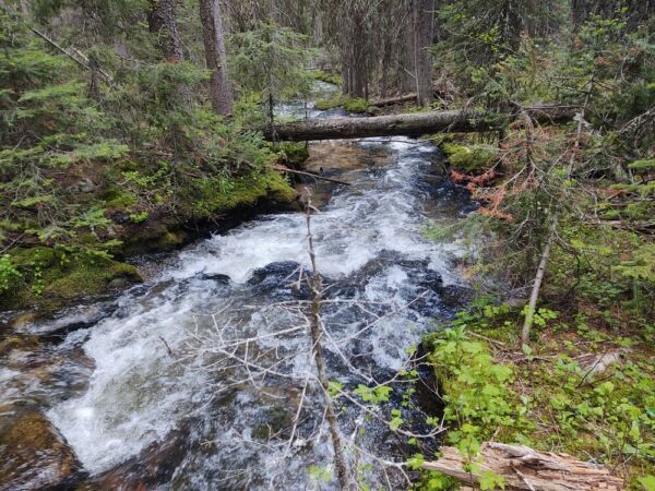 GOLD MINE Historic Philipsburg MT Flat Nose George Placer Gold Mining Claim