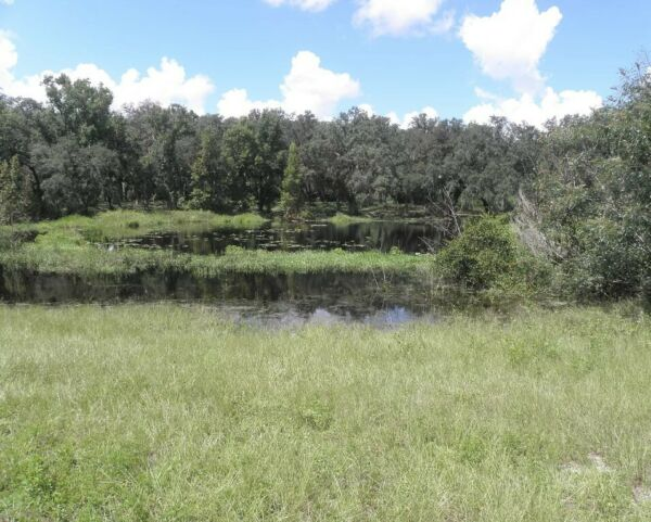 HUGE 24.25 Acre Lake Property *With Access* Between Gainesville