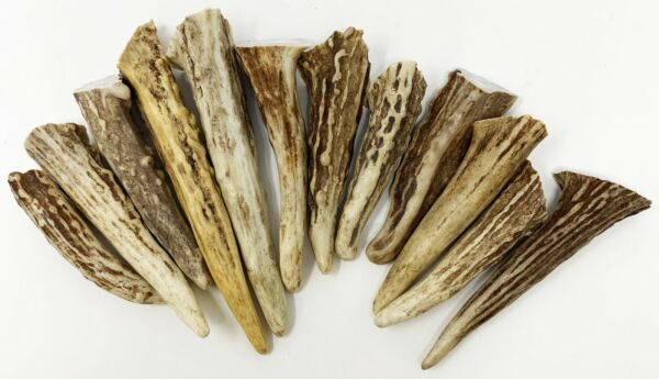 12Pack Deer Antler Gnarly Brow tine Tips Points Pendants Grade A $19.95