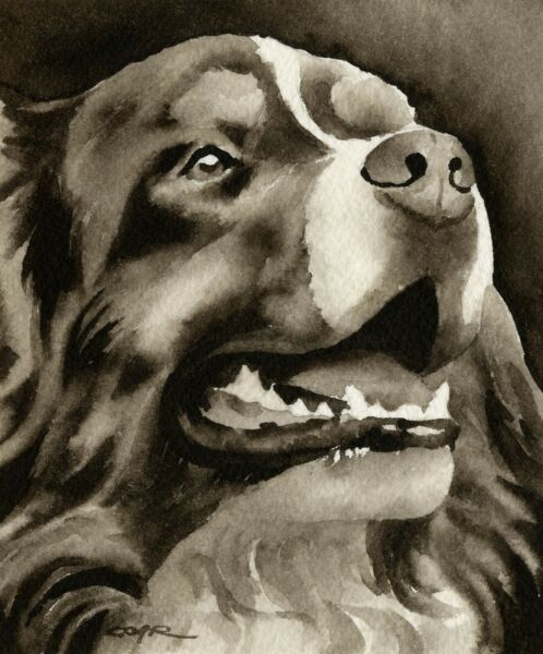Bernese Mountain Dog Sepia Watercolor 11 x 14 by Artist DJR