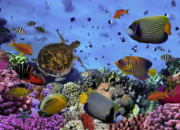 Colorful coral reef with tropical fish 3D Postcard Lenticular 91¢ shipping $3.95
