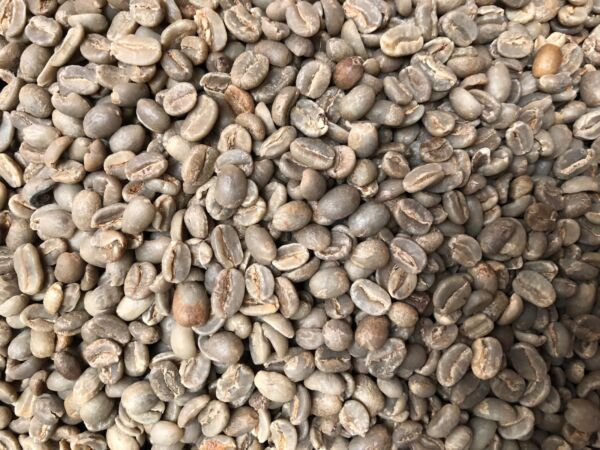 Sumatra Coffee Beans Un roasted Grade # 1 Green Coffee Current Corp 5 Pound Bag