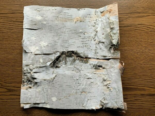 White Birch Bark Approximately 10 x 10 inches