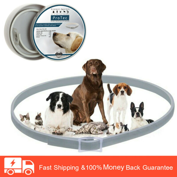 8 Months Flea and Tick Control for Dogs Waterproof Collar $8.99