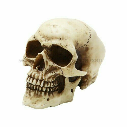 SMALL HOMOSAPIENS SKULL STATUE 3.5quot; COOL HALLOWEEN COLLECTIBLE $11.99