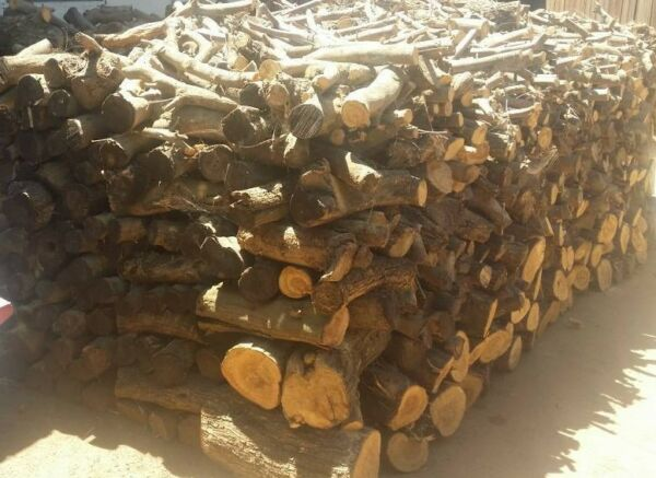 Olive Wood Logs wood projects