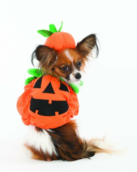 Dog Pet Cute Halloween Pumpkin Costume for Dogs Small FASHION PET $14.99