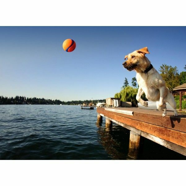 CHUCKIT Dogs Pet Fetch Balls & Toys Small Medium Large Launchers Interactive $12.44