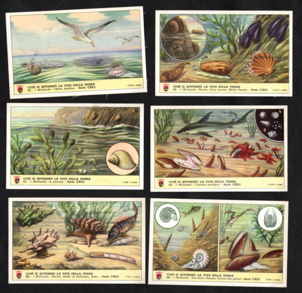 Shellfish amp; Molluscs Lavazza Coffee Card Set 1950s Mussels Limpet Oyster Snail