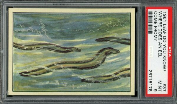 1961 Leaf Do You Know? #37 Where Does An Eel Come From? PSA 9 $40.00