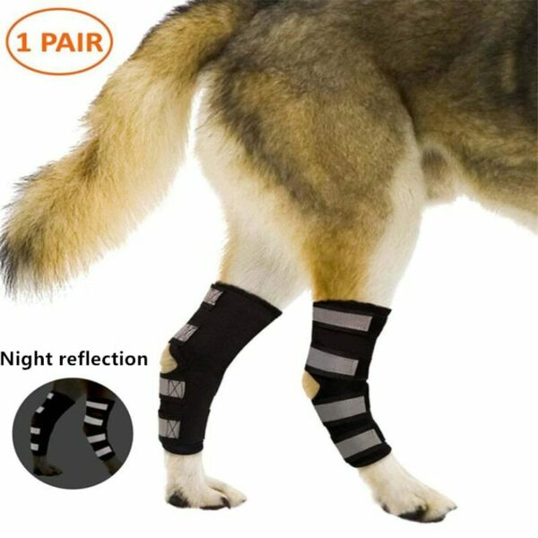 Knee Brace For Dogs Hock Protector ACL Therapeutic Dog Rear Leg 4 Strap SMLXL $19.99