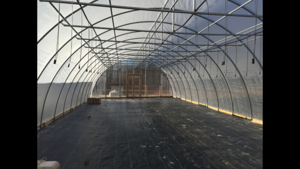 NEW 24 X 144 fT. GREENHOUSE KIT! Commercial ! 12 ft Ceiling ! Free Shipping T-T