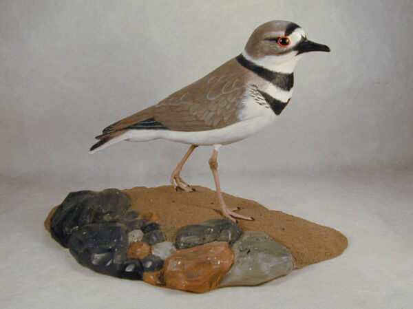 Killdeer Original Wood Pyrography