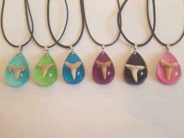 Real Shark Tooth Necklace Pendant Real Shark Teeth Choose Your Color