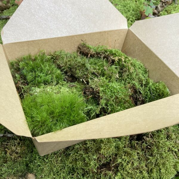 Live Assortment of Moss For Fairy Gardens Terrarium Sustainably Harvested $22.00