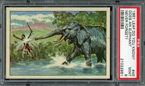 1961 Leaf Do You Know? #45 Does An Elephant Never Forget? PSA 9 *d2 $40.00