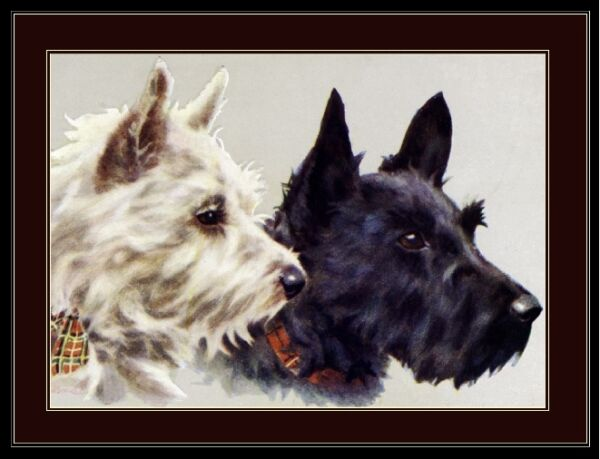 Print Scottish West Highland Terrier Dog Dogs Puppy Puppies Vintage Poster Art $7.99