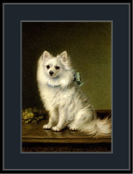 English Print White Pomeranian Puppy Dog Dogs puppies Vintage Art Picture Poster $7.99