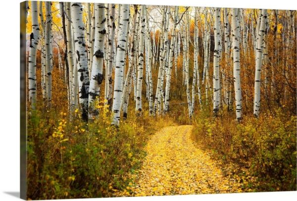 Colorado Yellow Aspen Leaves On Country Canvas Wall Art Print Forest Home